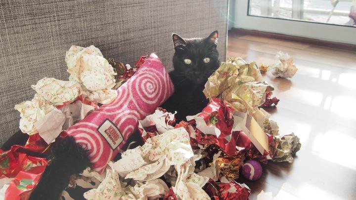 Katmas Cat, aka Diesel