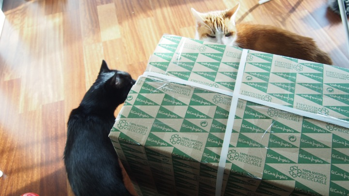 Delivery! Cats eyeing up the box up!