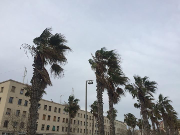 Palm trees and wind Barceloneta