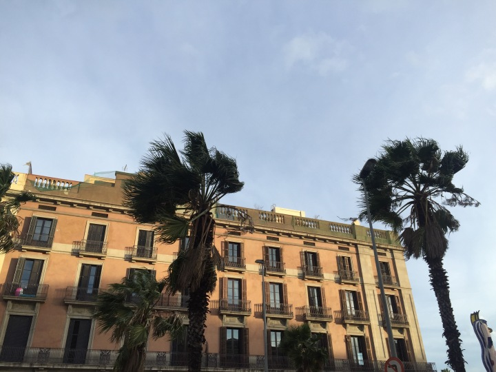 Palm trees and wind El Borne