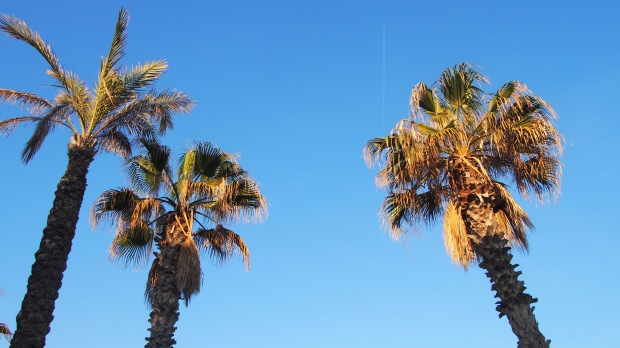 Day dreaming palm trees