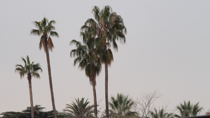 Palm trees, Barcelona Zoo