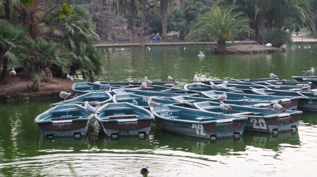 Seagulls, boating lake parc de la ciutadella