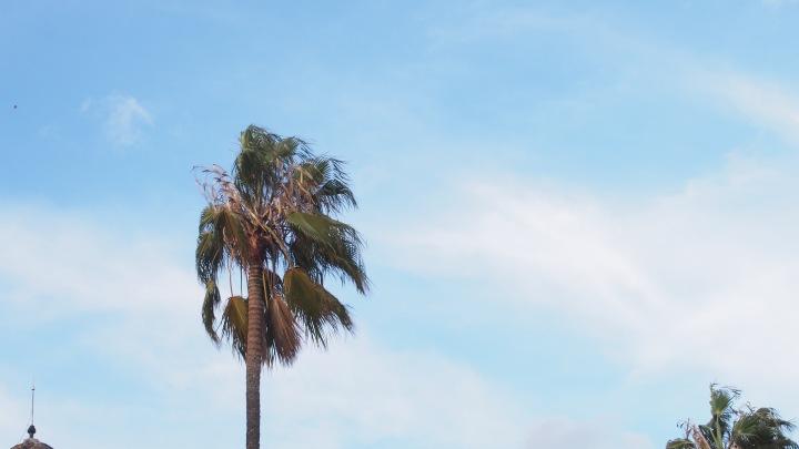 Palm tree and wind, Parc Citadella