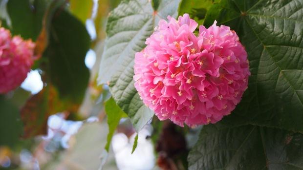 Pink winter flowers Barcelona Zoo