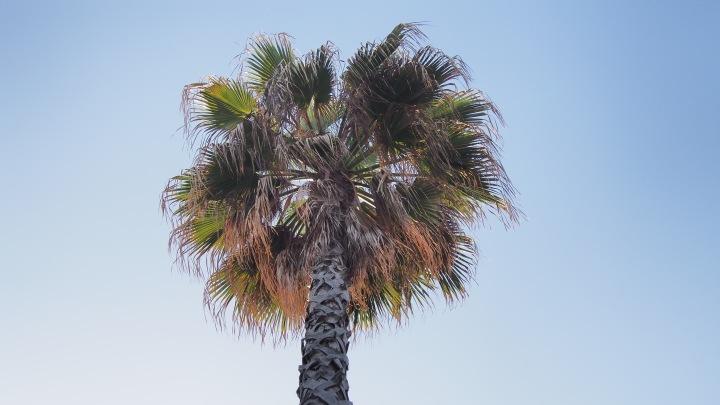 Sunny palm tree