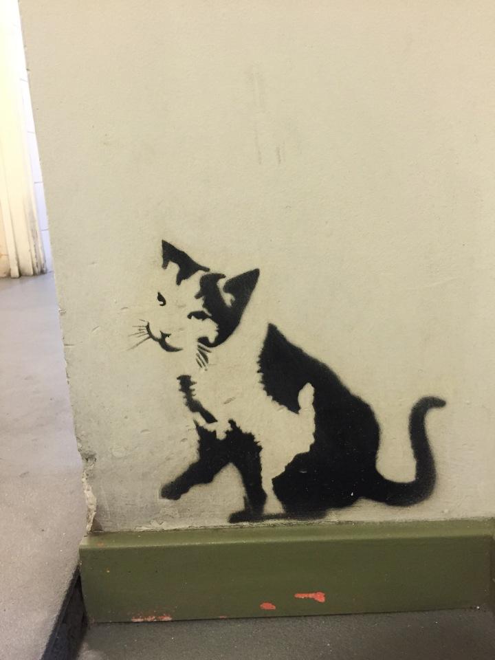 Graffiti Cat Bacoa city centre