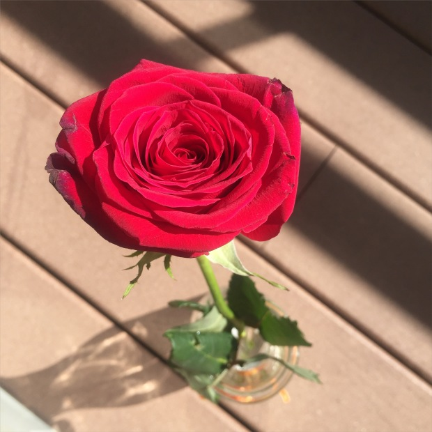 St Jordi Rose