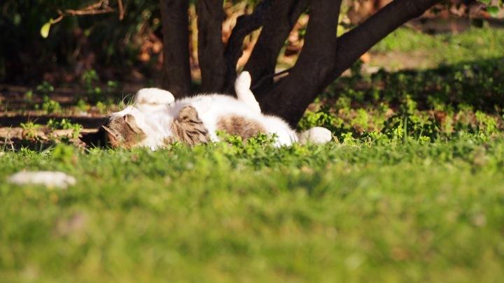 Zoo cat, Barcelona Zoo