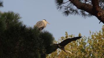 Heron Barcelona Zoo